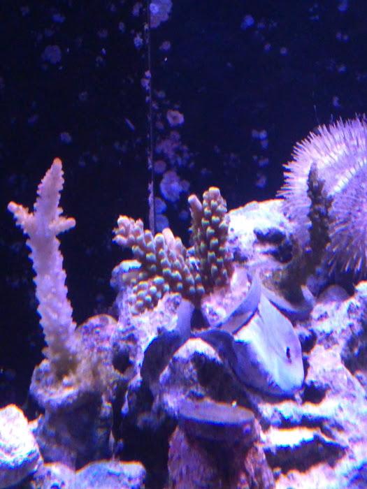 实际的11月Coral.jpg