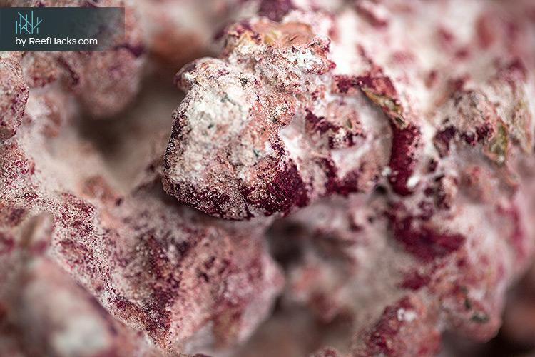 AF-Rocks-Reef-Rocks-002.jpg