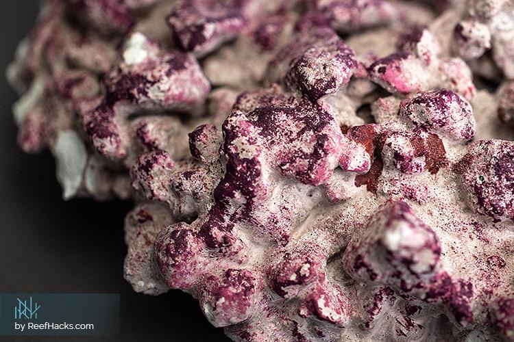 AF-Rocks-Reef-Rocks-006.jpg