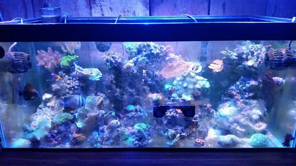 Best Led Lights On A Budget Reef2reef Saltwater And Reef