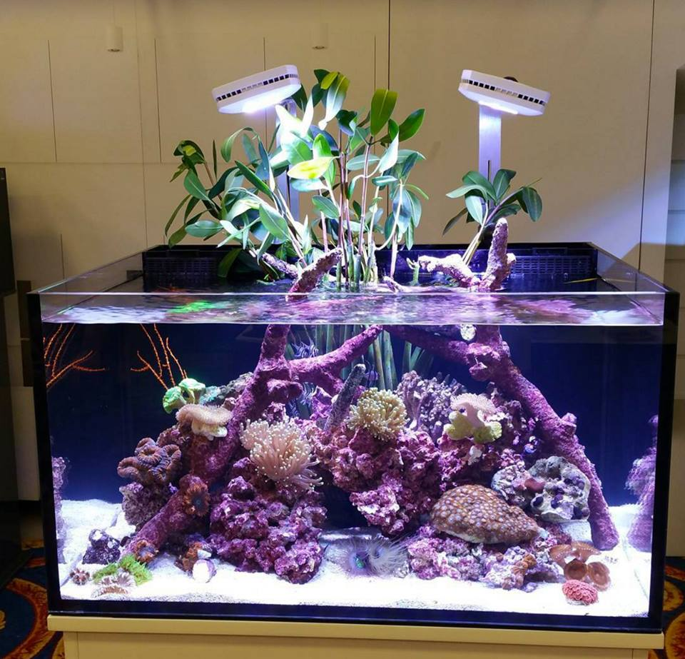 AquaIllumination has the lighting to do it! & How many of you grow plants in your reef? | REEF2REEF Saltwater ... azcodes.com