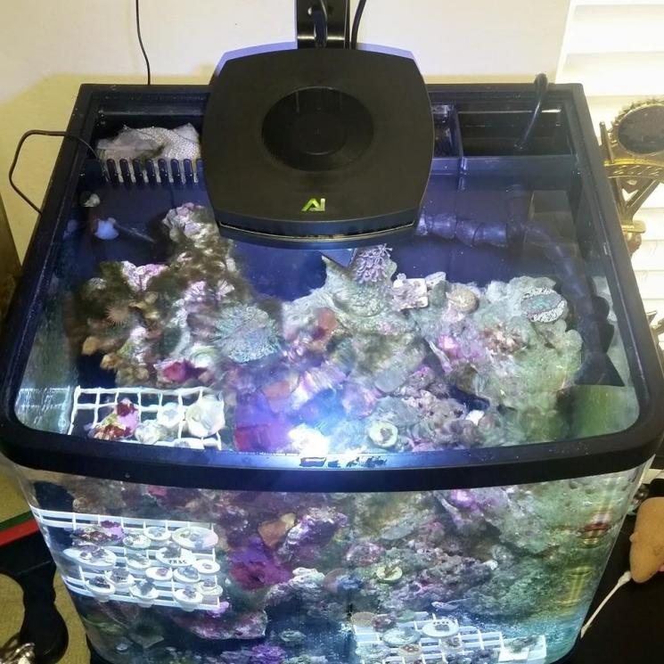 Ai Prime Thoughts Reef2reef Saltwater And Reef Aquarium