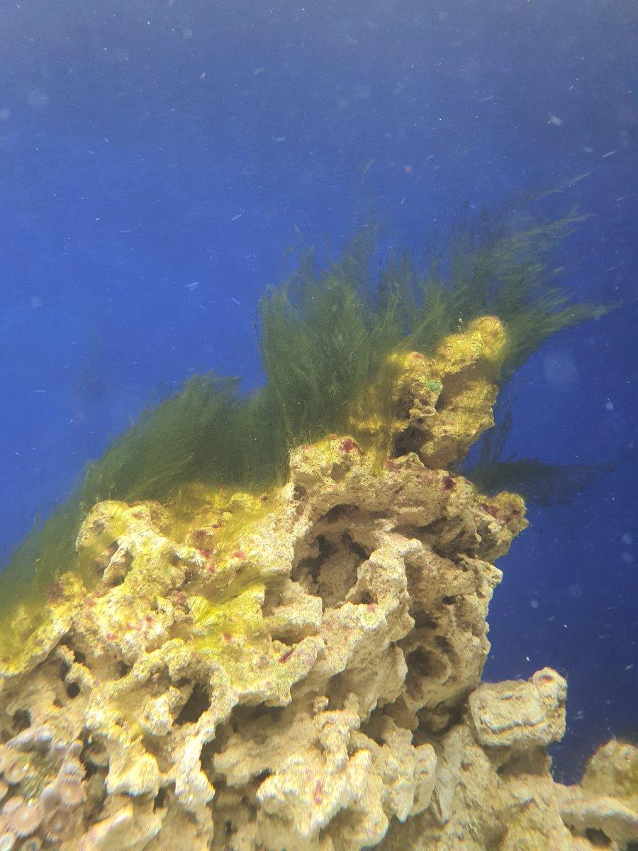 algae 2.jpg
