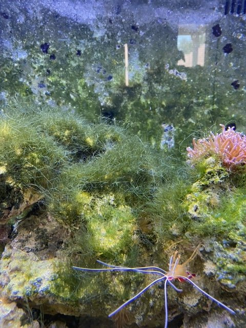 Algae1.jpeg