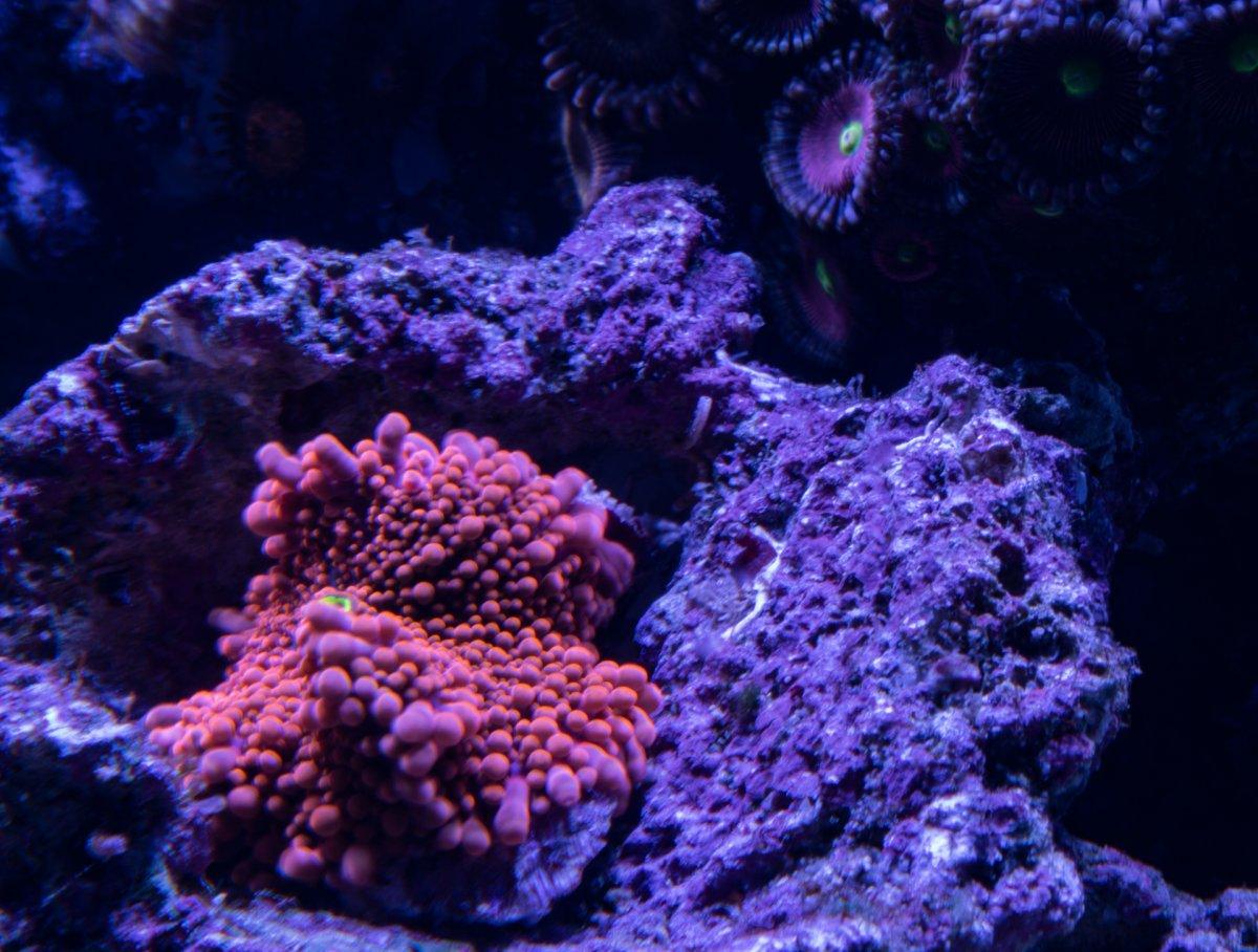 ambient-aquatics-saurons-eye.jpg