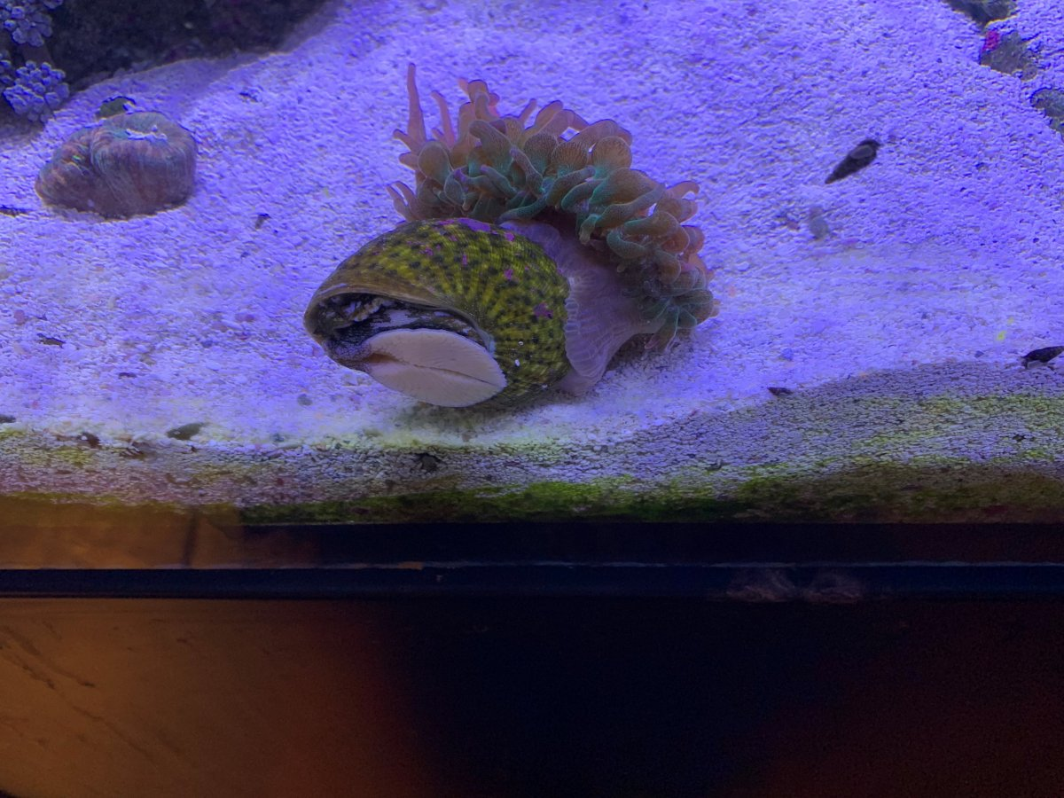 anemone.snail.jpg