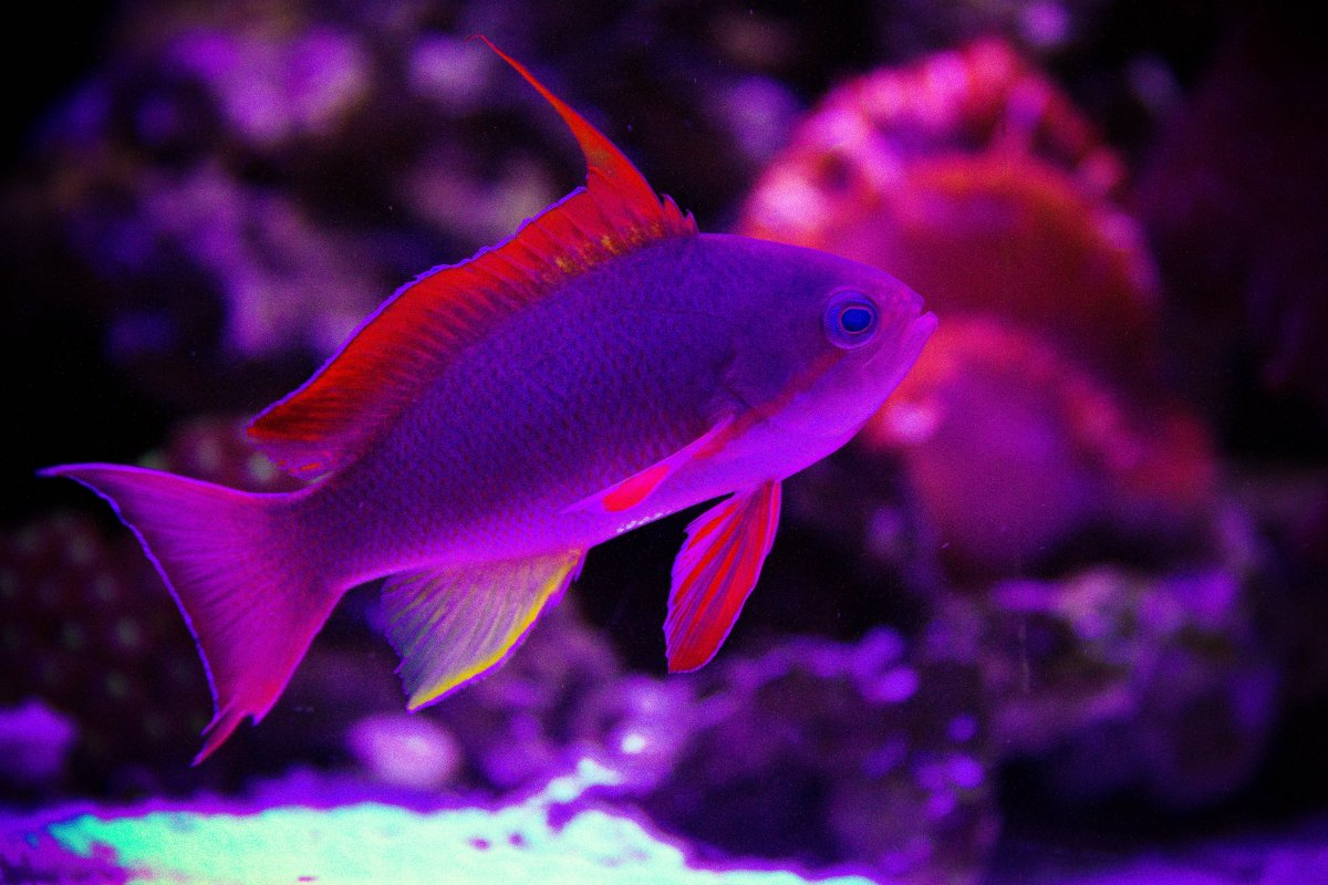 Freshwater aquarium fish orlando - Anthea Jpg