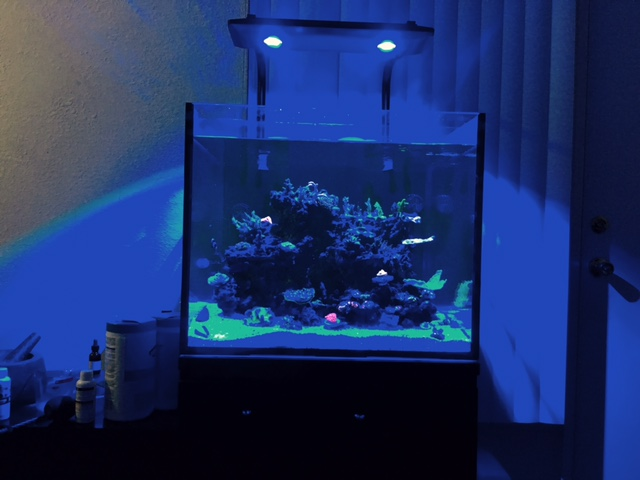 over kill on light maybe kessil ap700 reef2reef saltwater and