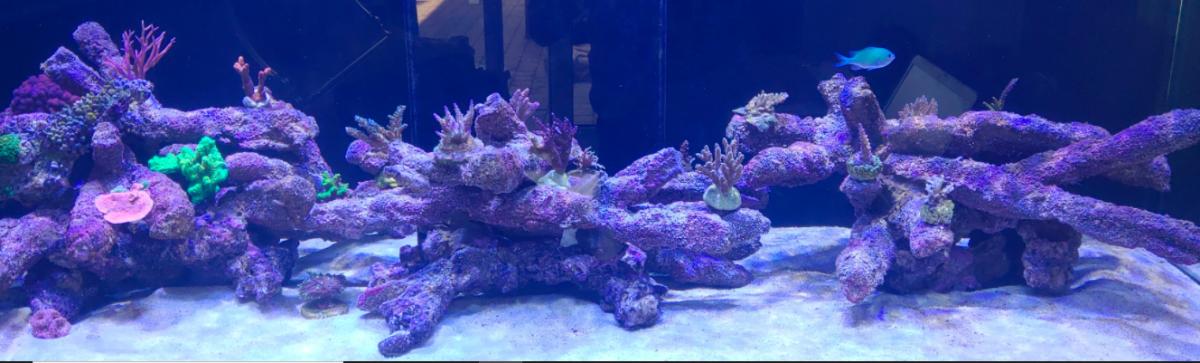 Aqua 18-8-2020.PNG