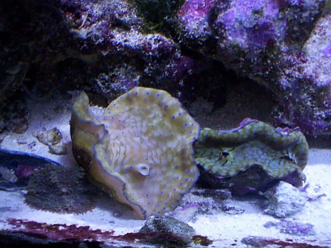 Aquarium 110.jpg