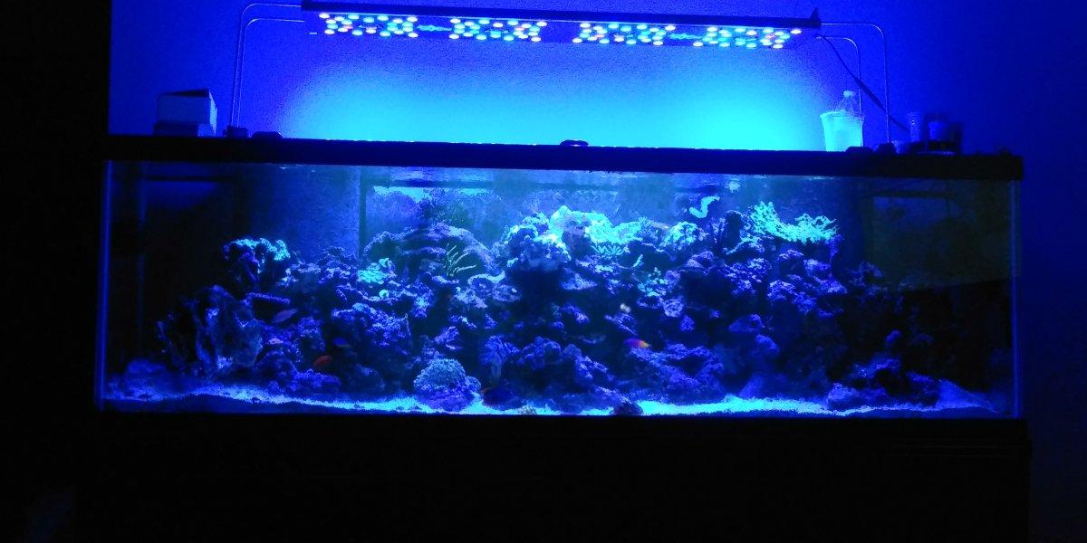 aquarium 1120.jpg