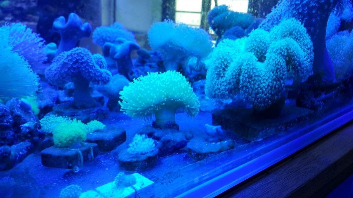 Aquarium-LED-lighting.jpg