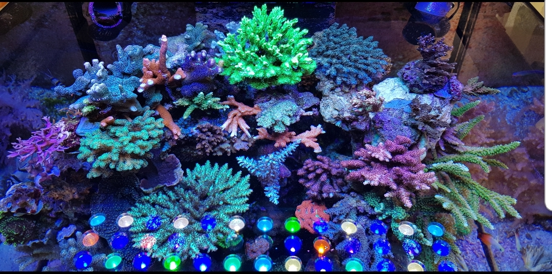 Aquarium LED -lighting.jpg