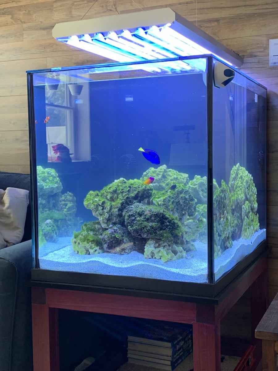Aquarium May 2020.jpg