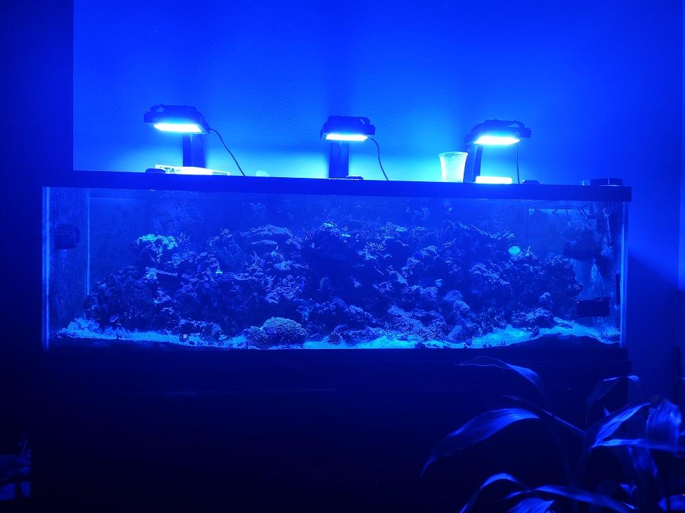 aquarium update 2.jpg