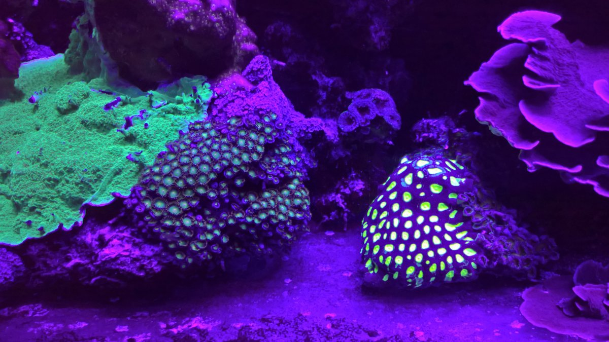 aquarium_LED_light_violet_Purple.jpg