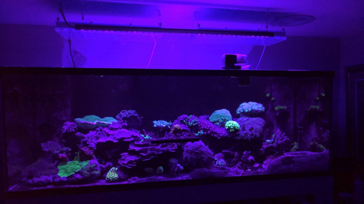 Aquarium_LED_light_violet_Purple_-UV--1600x901.jpg