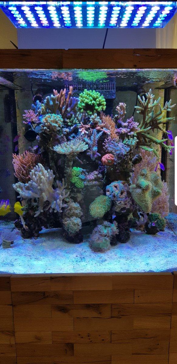 Aquarium_LED_lighting.jpg