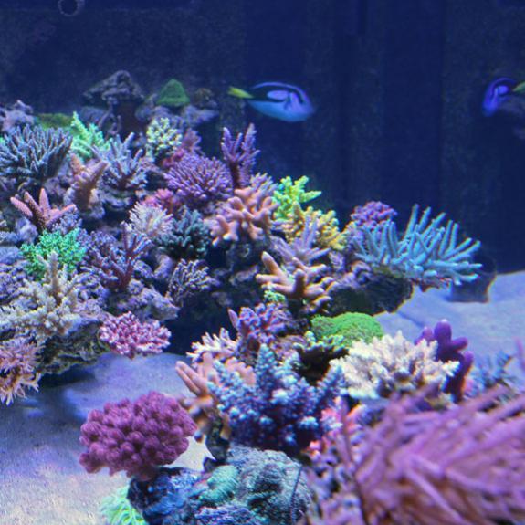 AquariumMarkusWEB Kopie.jpg