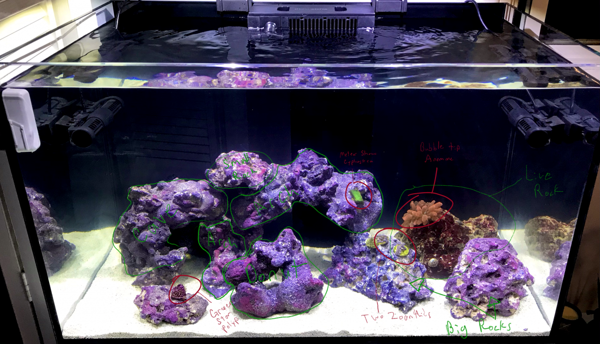 Aquascape-angle-named.png
