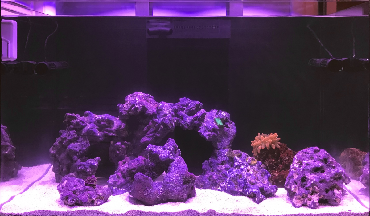 Aquascape-front.png