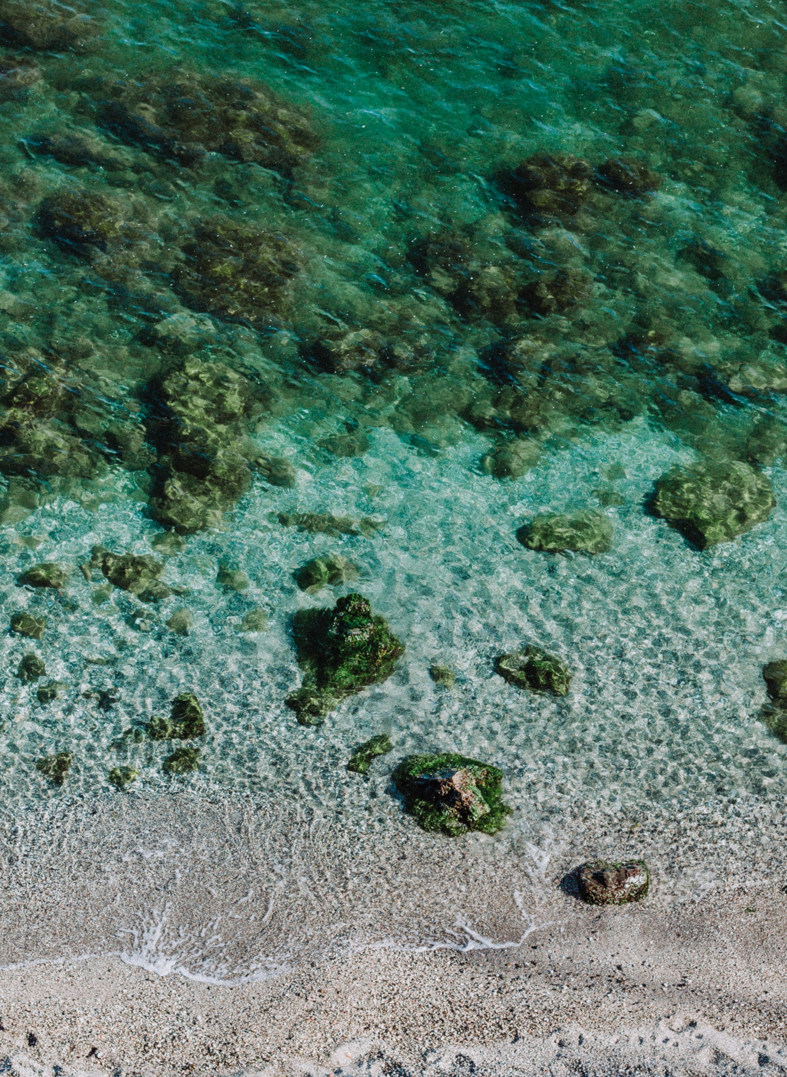 aquatic-clear-corals-564899.jpg