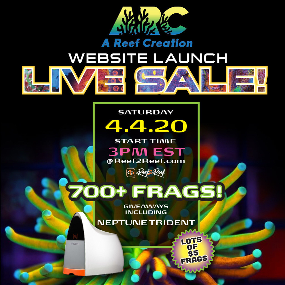 ARC-LiveSale-1024x1024.jpg