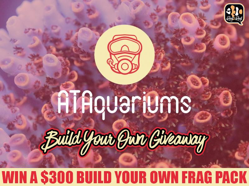ATAquariums giveaway.jpg