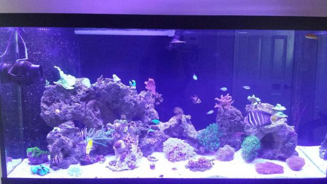 ... light only. att_1415553303192168.jpg ... & how long should I run my lights? | REEF2REEF Saltwater and Reef ... azcodes.com