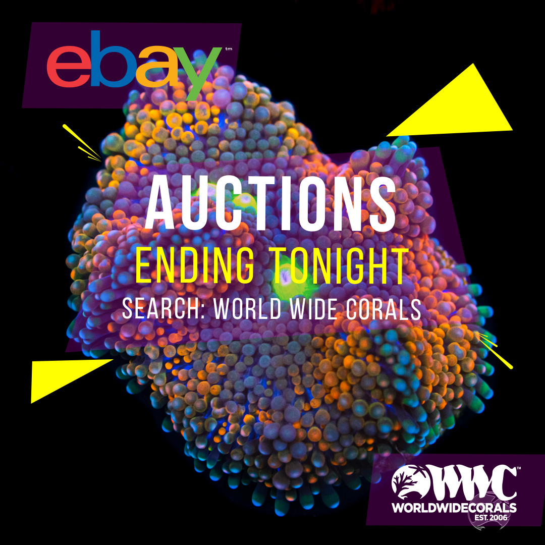 auctions6.jpg