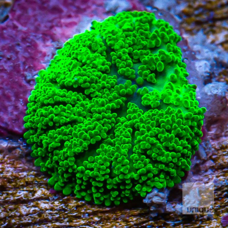 Baby Mushroom 19 5.jpg