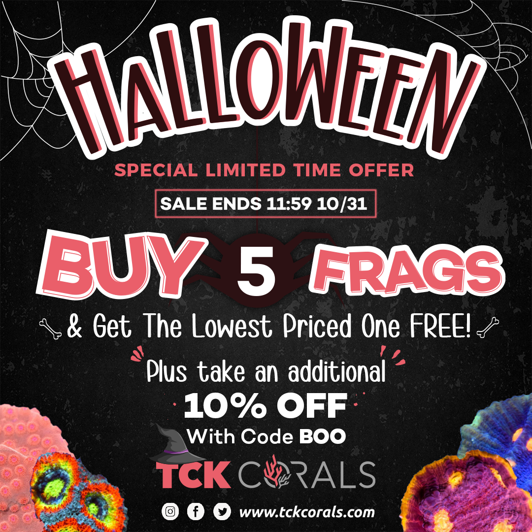 banner tck halloween Social Media Post Square 1080 x 1080.png