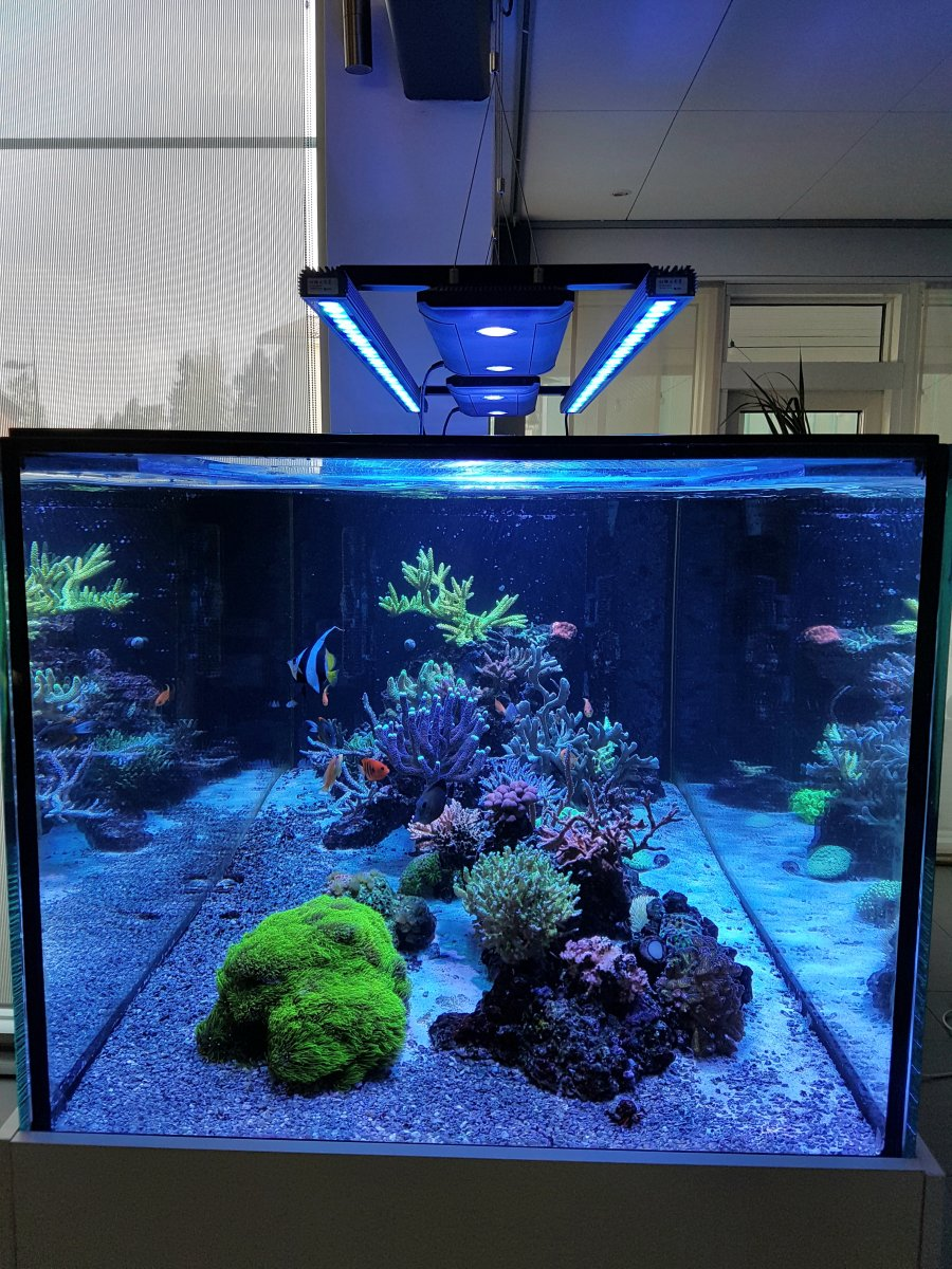 Bar-LED-aquarium-light-Orphek-OR-120.jpg
