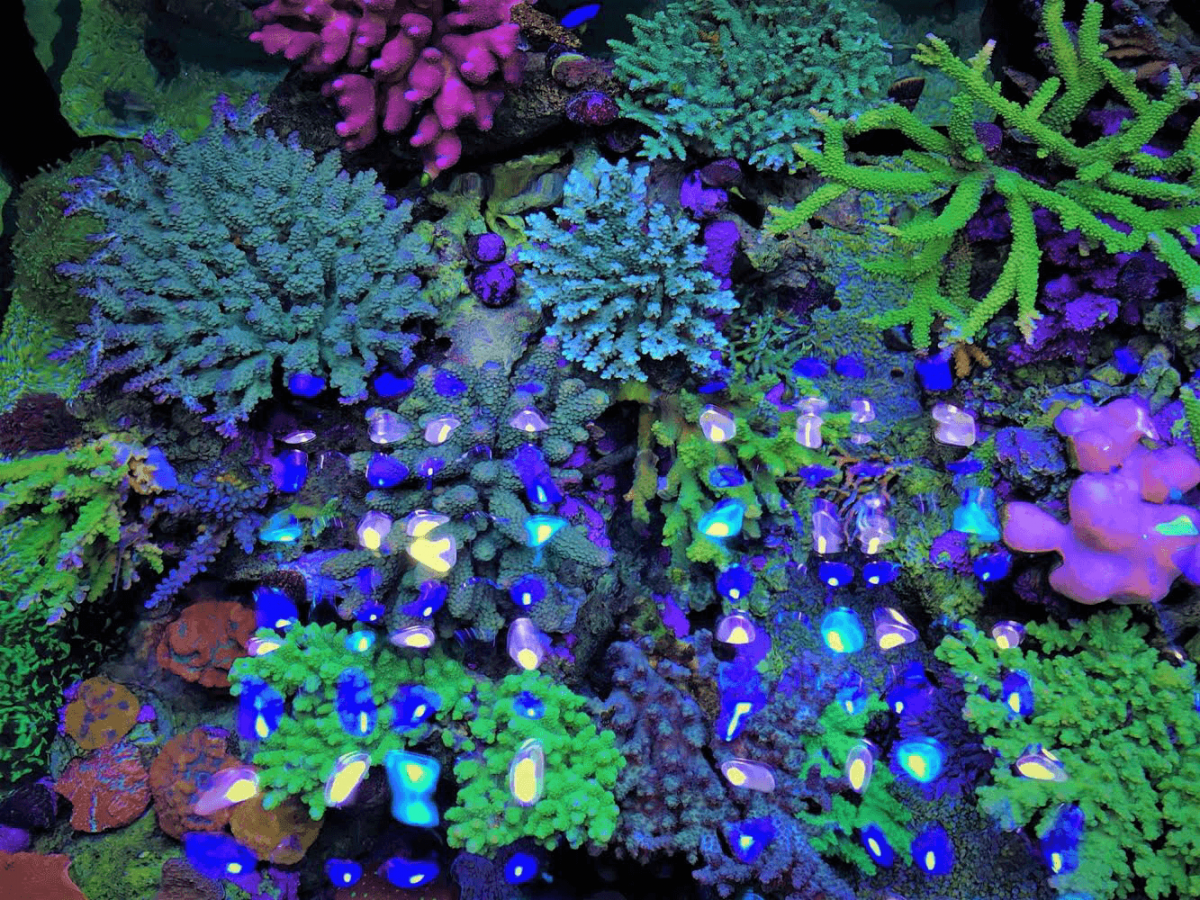 Best_aquarium_LED_lighting.png