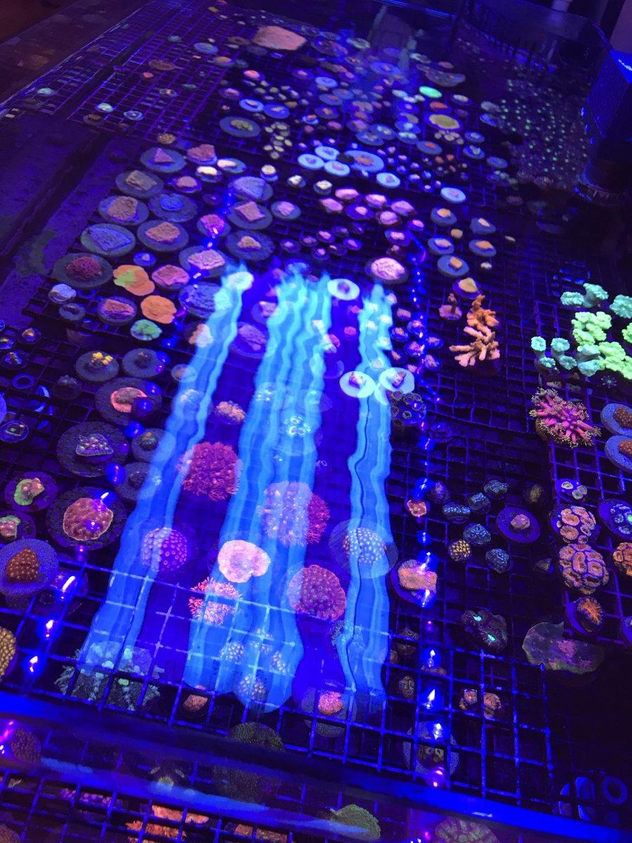 BigR 6 Corals.jpg