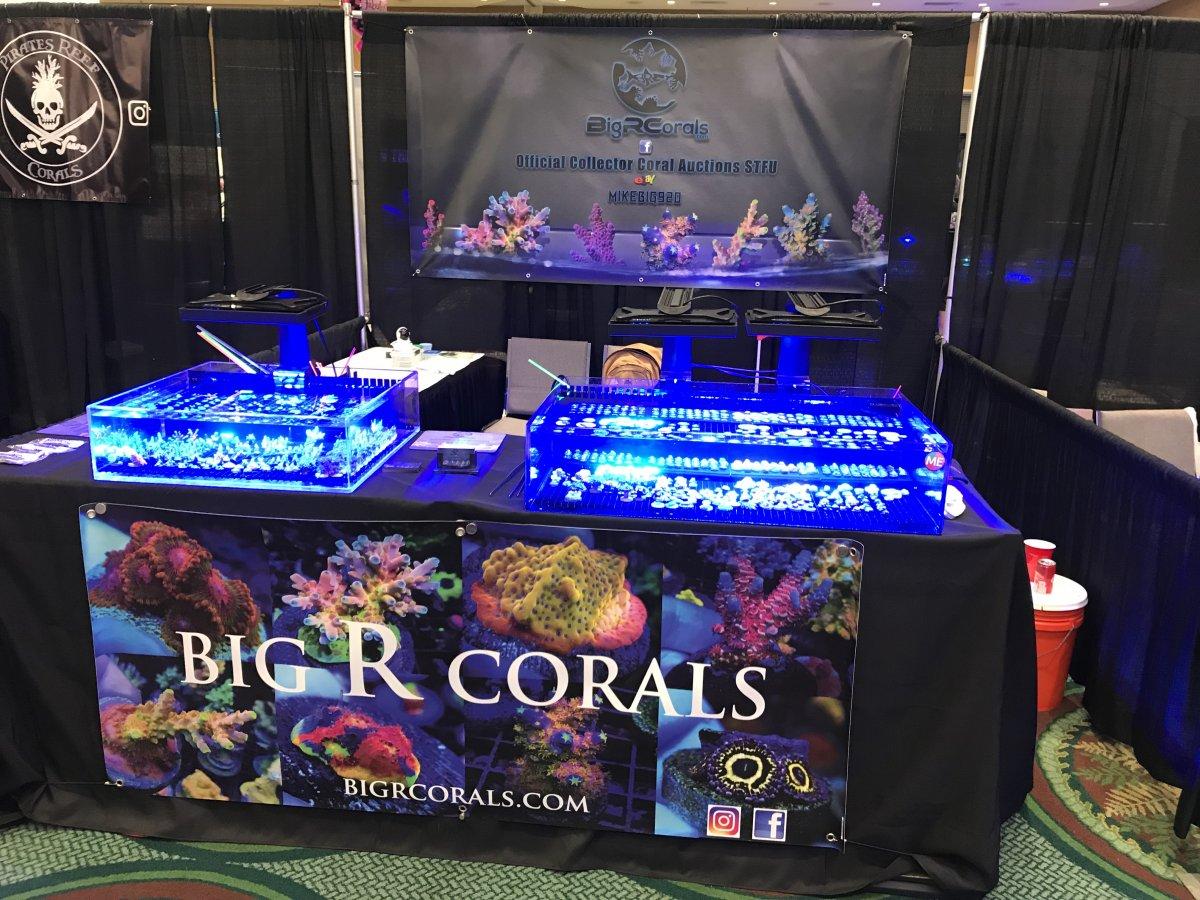 BigR4 Corals.jpg