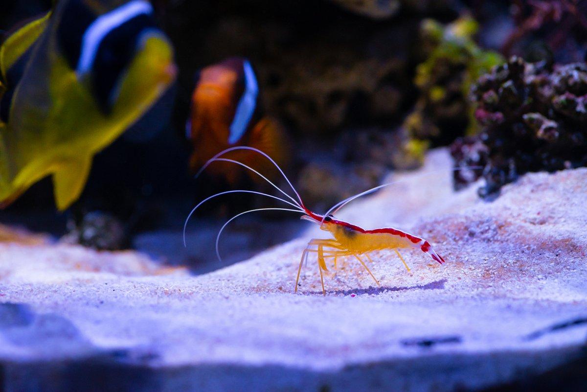 bigstock-Nice-Color-Doctor-Shrimp-Sea-A-282499024.jpg