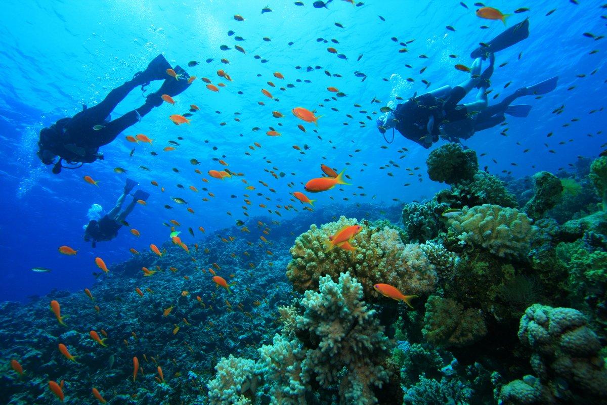 bigstock-Scuba-Diving-on-a-Coral-Reef-w-26725130.jpg
