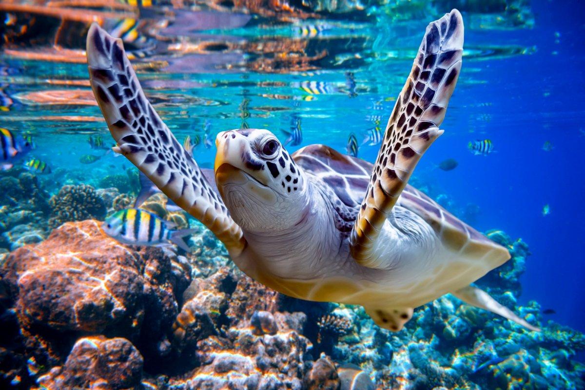 bigstock-Sea-turtle-swims-under-water-o-267182512.jpg