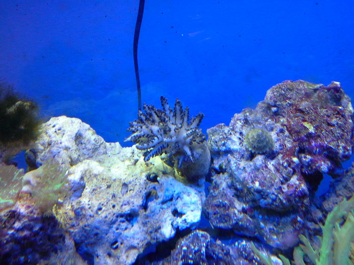 Black leather coral.jpg