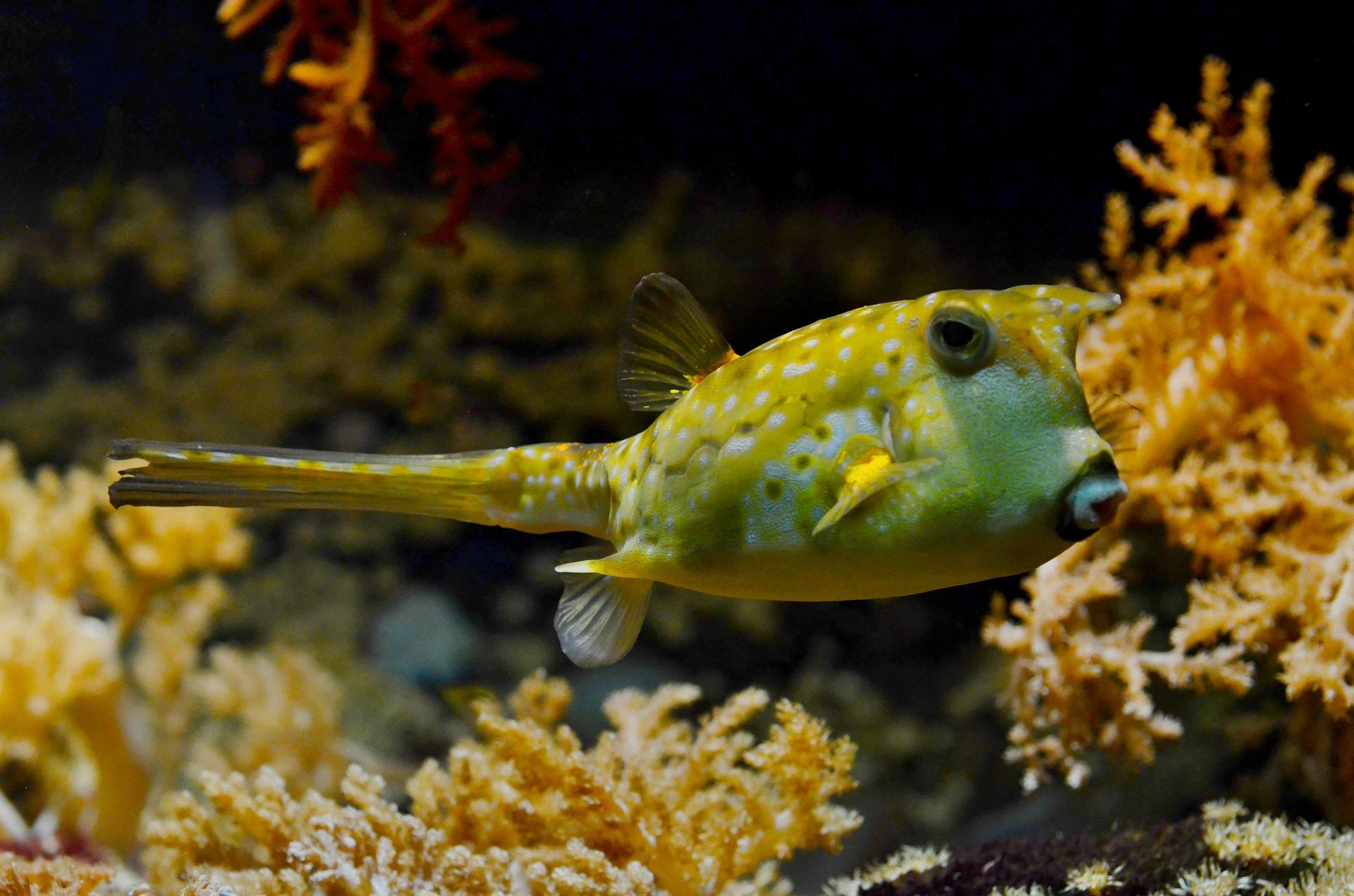 blowfish-609381_1920.jpg