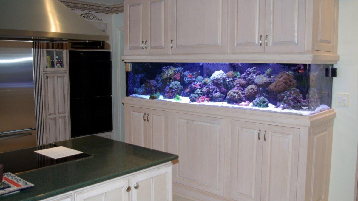 blue-planet-aquarium-services-temp-bg-13b.jpg