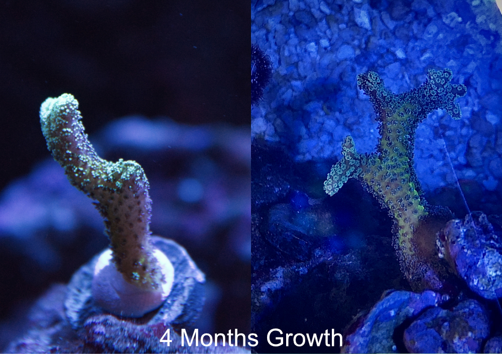 BN-Growth.jpg