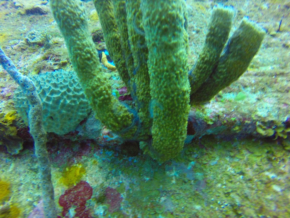 boat sponges1 (1 of 1).jpg