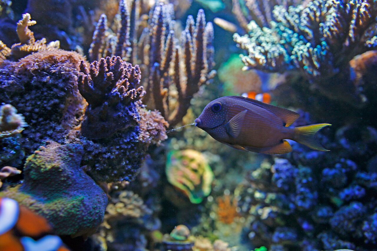 bobby m fish 2.jpg