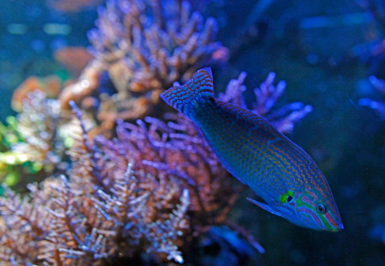 Bobby M fish.jpg