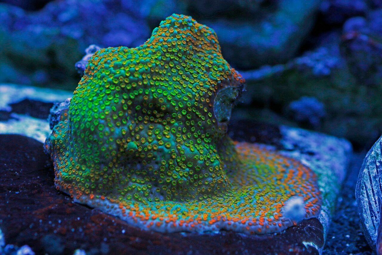 bobbym coral 14.jpg