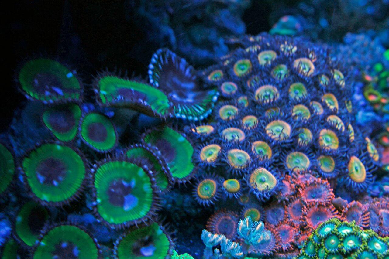 bobbym coral 15.jpg