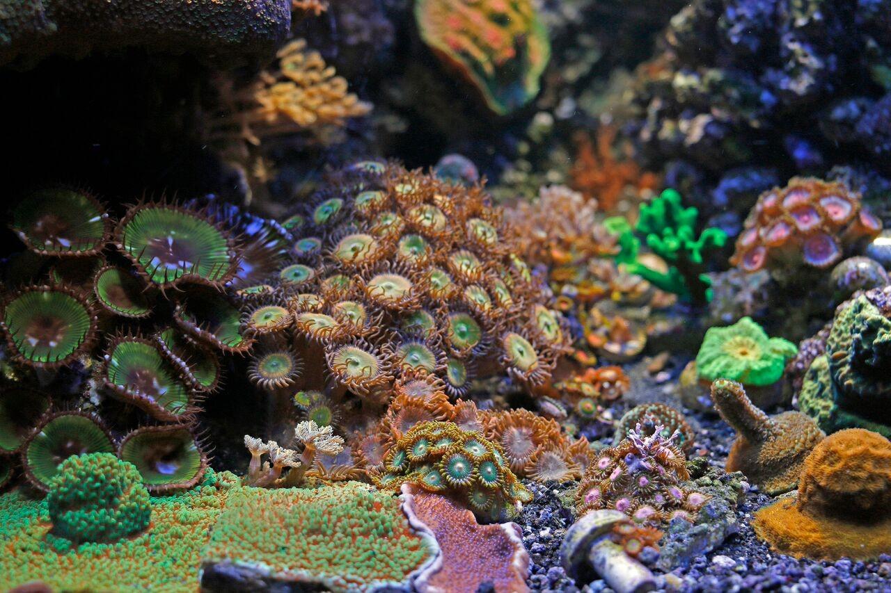bobbym coral 17.jpg