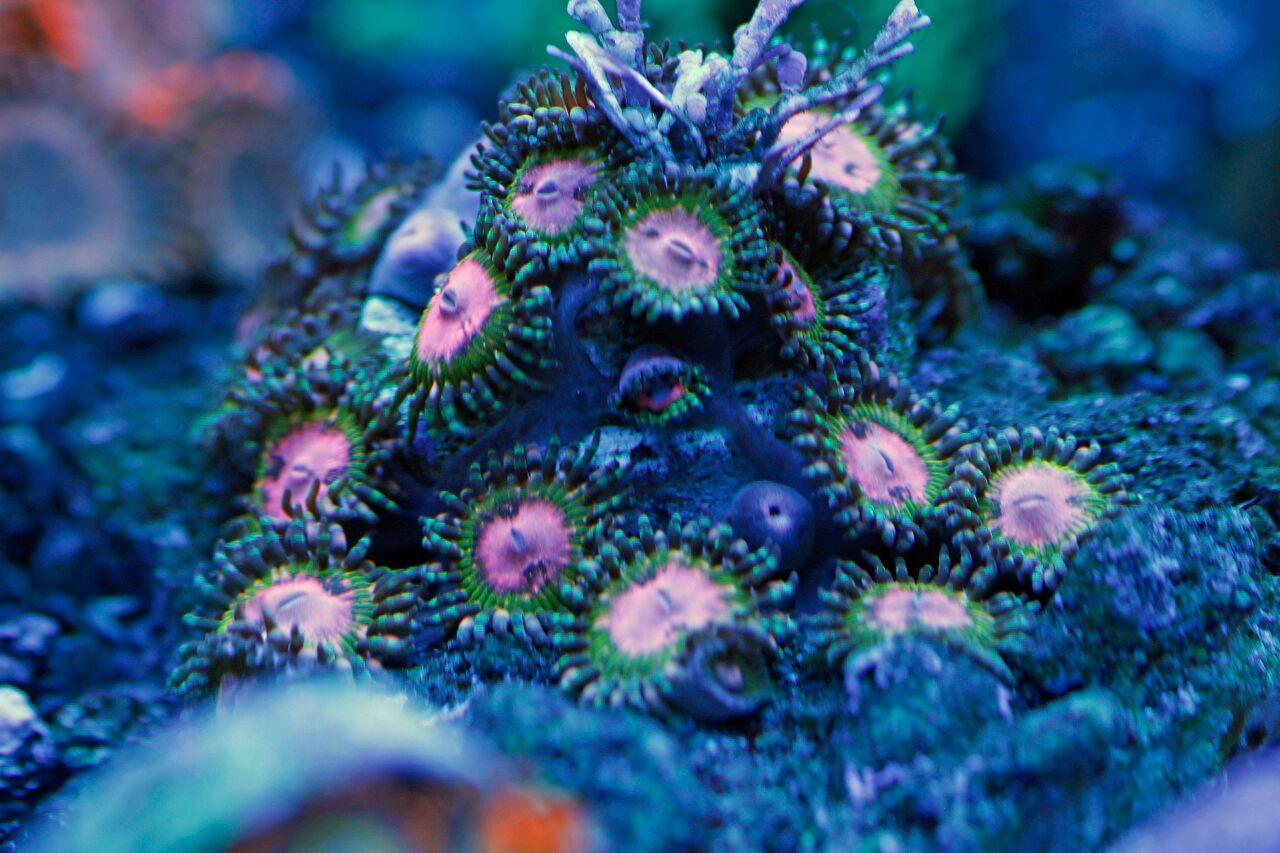 bobbym coral 18.jpg